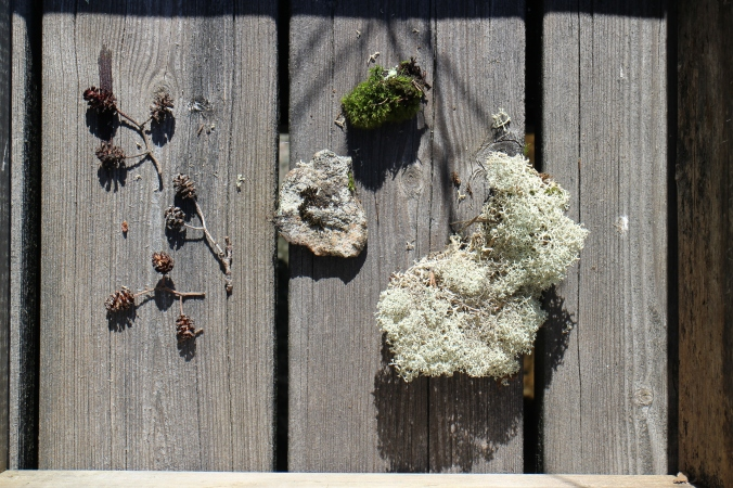 Natural Brushes: small cones, a rock and some different kinds of moss.
