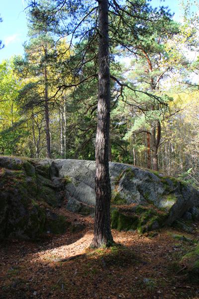 Portræt af et træ / Portrait of a tree.